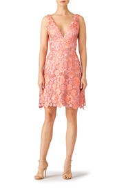 Guava Lace Dresses