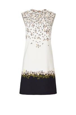 Fresh Flower Printed Shift Dress by Giambattista Valli