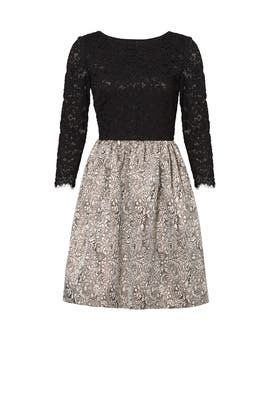 Black Lace Polly Dress by ERIN erin fetherston