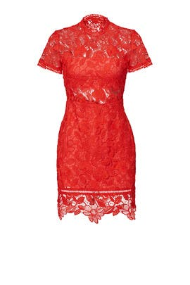 Red Lace Sheath by Lovers + Friends