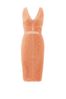 Orange Straight Edge Lace Sheath by Bailey 44